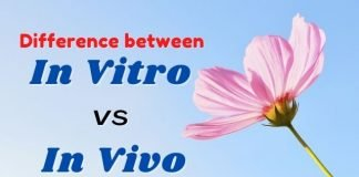 difference between in vitro and in vivo fertilization