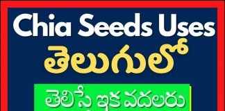 Chia Seeds In Telugu 2021
