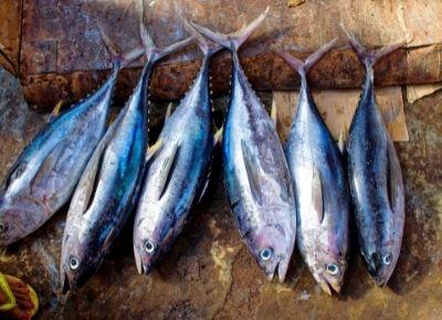 Tuna Fish In Telugu